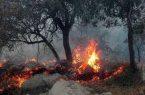 هشدار سازمان هواشناسی نسبت به آتشسوزی جنگلها